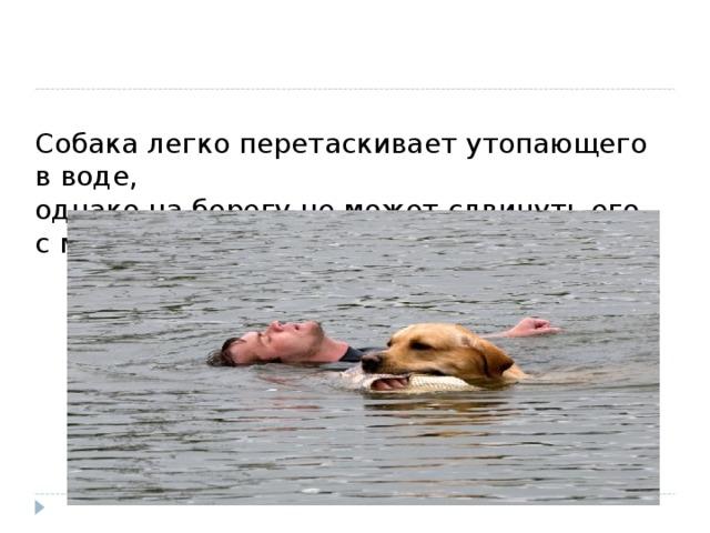 Собака легко перетаскивает утопающего в воде,  однако на берегу не может сдвинуть его с места. Почему?