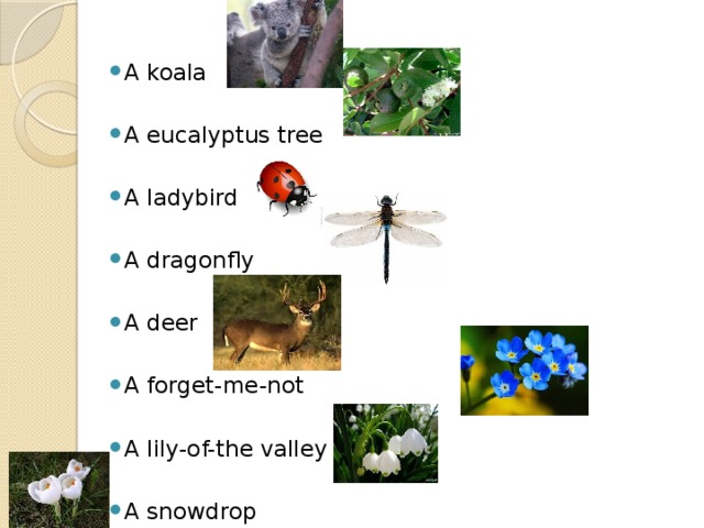 A koala A eucalyptus tree A ladybird A dragonfly A deer A forget-me-not A lily-of-the valley A snowdrop