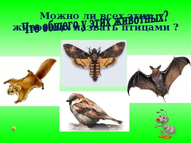 Можно ли всех этих животных назвать птицами ?