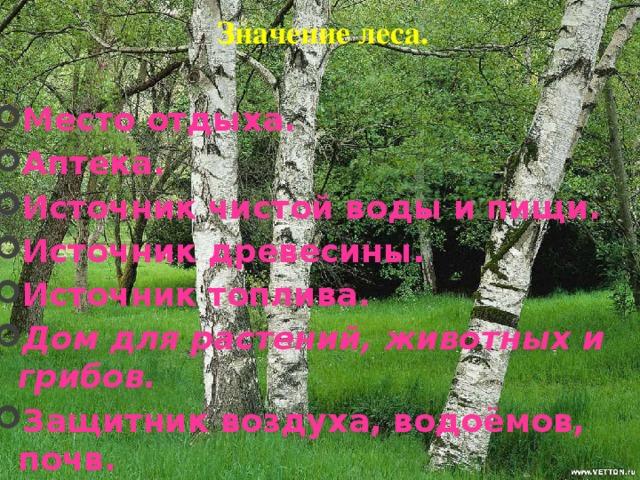 Значение леса.