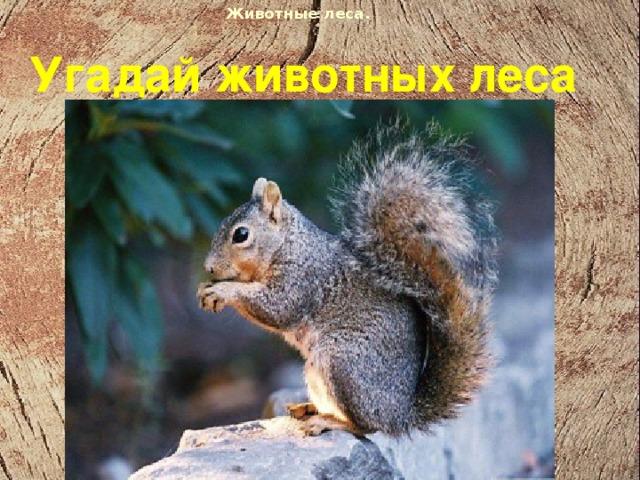 Животные леса.  Угадай животных леса