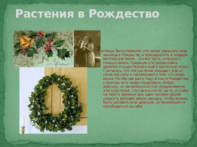 Растения в Рождество Британцы были первыми, кто начал украшать свои жилища к Рождеству и преподносить в подарок висячие растения – это мог быть, остролист, плющ и омела. Традиция эта чрезвычайно древняя и существовала еще в языческую эпоху. Считалось, что эти растения очищают дом от нечистой силы и напоминают о том, что скоро весна. По обычаю раз в году, в канун Рождества, у мужчин есть право поцеловать любую девушку, остановившуюся под украшением из этого растения. Случается это не часто, и чтобы не терять времени зря, один человек решил украсить ветками амелы зеркало, чтобы можно было целовать всех девушек, остановившихся полюбоваться на себя.