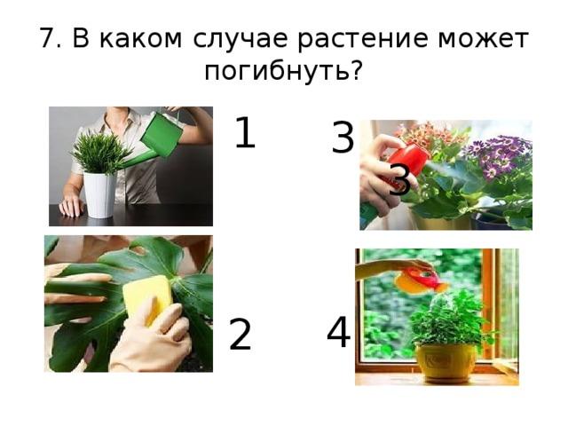 7. В каком случае растение может погибнуть? 1 3 3 2 4