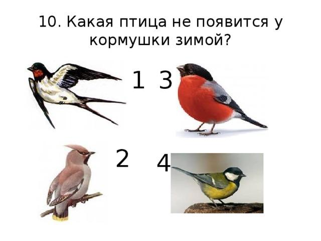 2 10. Какая птица не появится у кормушки зимой? 1 3 4