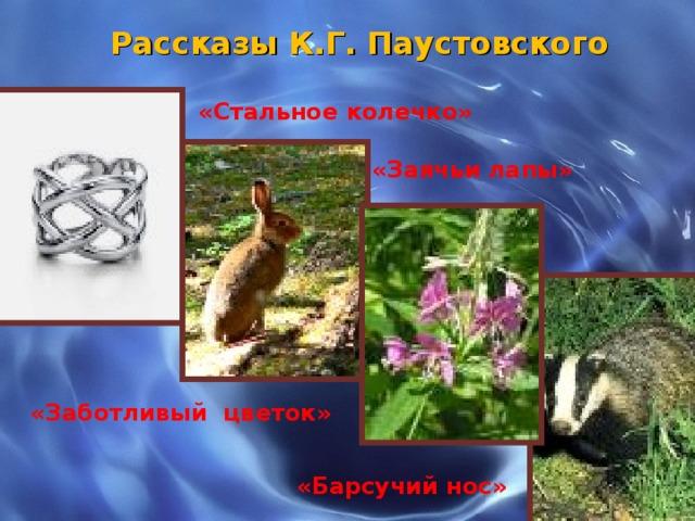 Рассказы К.Г. Паустовского «Стальное колечко» «Заячьи лапы»  «Заботливый цветок» «Барсучий нос»