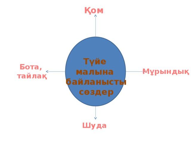 Қом Түйе малына байланысты сөздер Бота, тайлақ Мұрындық Шуда