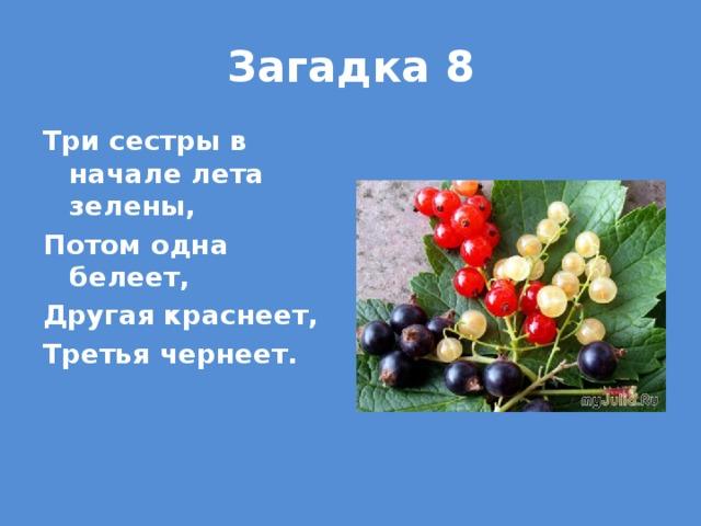 Загадка 8 Три сестры в начале лета зелены, Потом одна белеет, Другая краснеет, Третья чернеет.