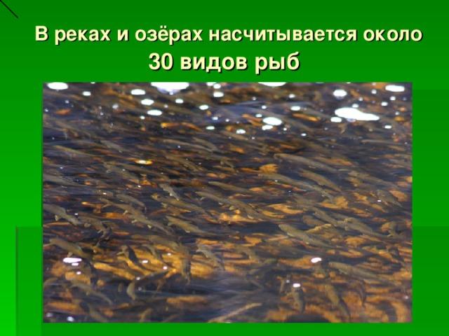 В реках и озёрах насчитывается около 30 видов рыб