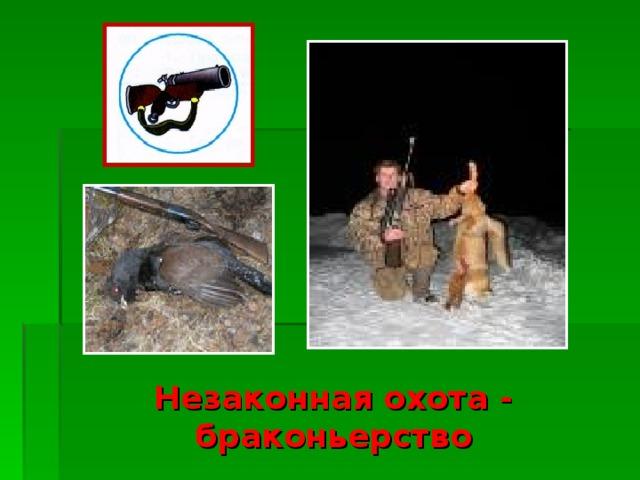 Незаконная охота - браконьерство