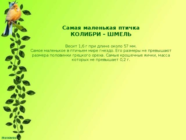 Самая маленькая птичка  КОЛИБРИ – ШМЕЛЬ   Весит 1,6 г при длине около 57 мм.  Самое маленькое в птичьем мире гнездо. Его размеры не превышают размера половинки грецкого ореха. Самые крошечные яички, масса которых не превышает 0,2 г.