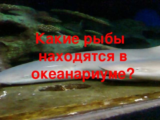 Какие рыбы находятся в океанариуме?