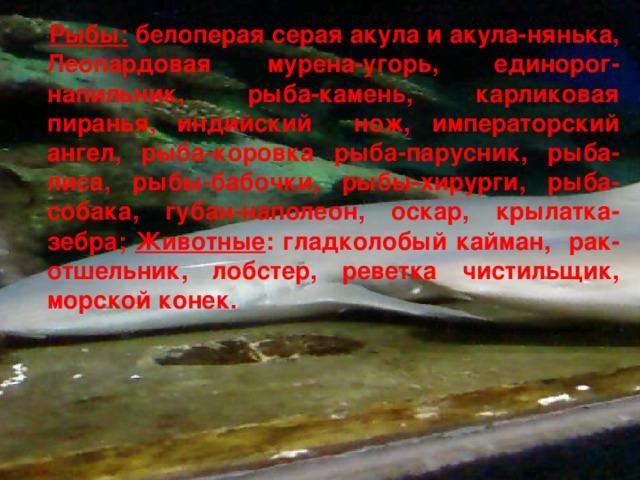 Рыбы: белоперая серая акула и акула-нянька, Леопардовая мурена-угорь, единорог-напильник, рыба-камень, карликовая пиранья, индийский нож, императорский ангел, рыба-коровка рыба-парусник, рыба-лиса, рыбы-бабочки, рыбы-хирурги, рыба-собака, губан-наполеон, оскар, крылатка-зебра; Животные : гладколобый кайман, рак-отшельник, лобстер, реветка чистильщик, морской конек.