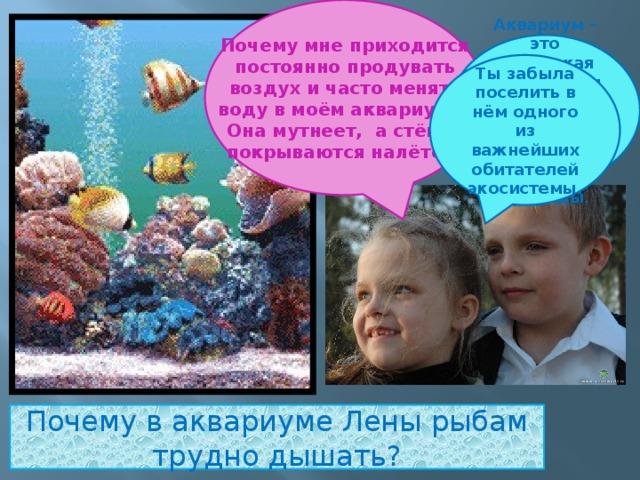 Почему мне приходится постоянно продувать воздух и часто менять воду в моём аквариуме? Она мутнеет, а стёкла покрываются налётом . Аквариум – это маленькая искусственная экосистема. Она подчиняется законам природы . Ты забыла поселить в нём одного из важнейших обитателей экосистемы. Почему в аквариуме Лены рыбам трудно дышать?