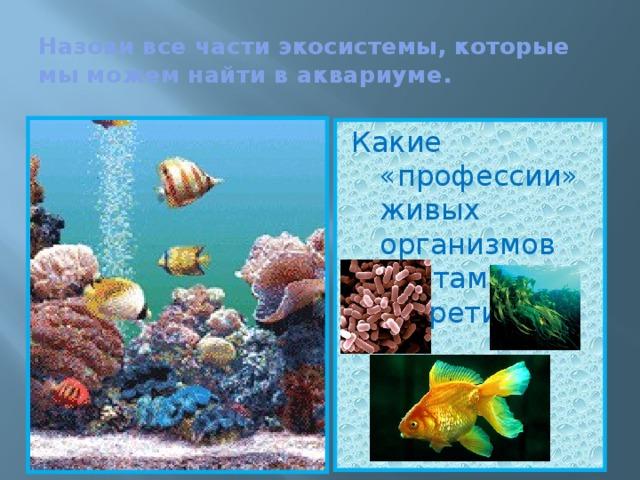 Назови все части экосистемы, которые мы можем найти в аквариуме. Какие «профессии» живых организмов мы там встретим?