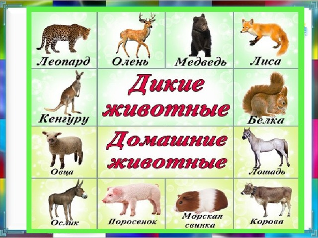 Животные картинки домашние и дикие