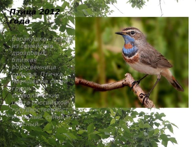 Птица 2012 года Варакушка – птица из семейства дроздовых, близкая родственница соловья. Птичка, носящая на своей груди символические цвета российской государственности – белый, синий и красный.