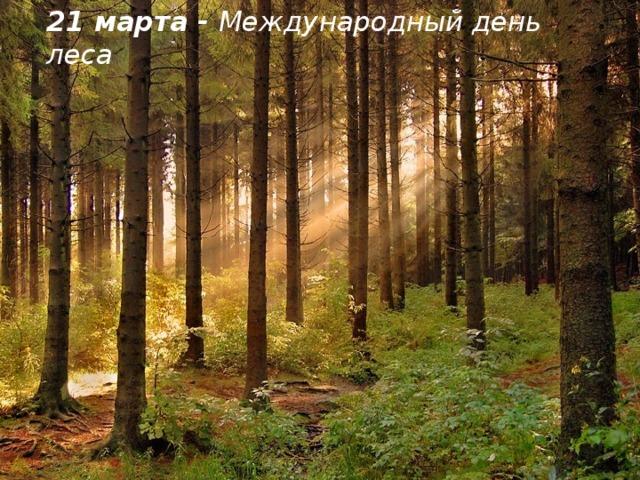21 марта - Международный день леса