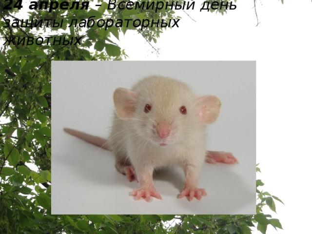 24 апреля – Всемирный день защиты лабораторных животных