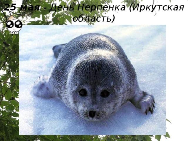 25 мая - День Нерпенка (Иркутская область)