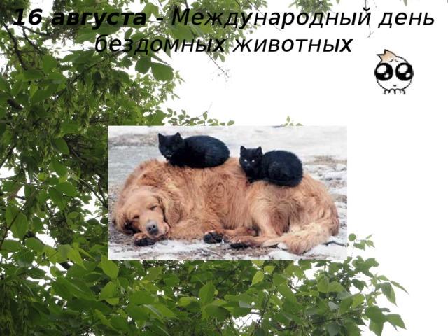 16 августа - Международный день бездомных животных
