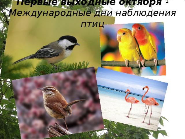 Первые выходные октября - Международные дни наблюдения птиц