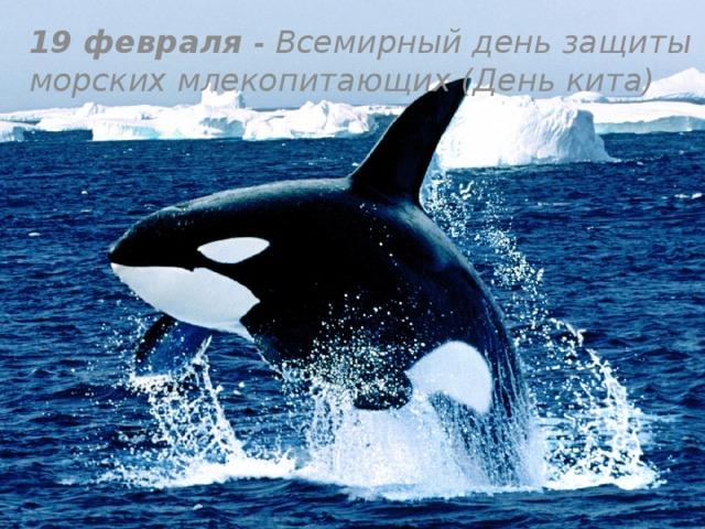 19 февраля - Всемирный день защиты морских млекопитающих (День кита)