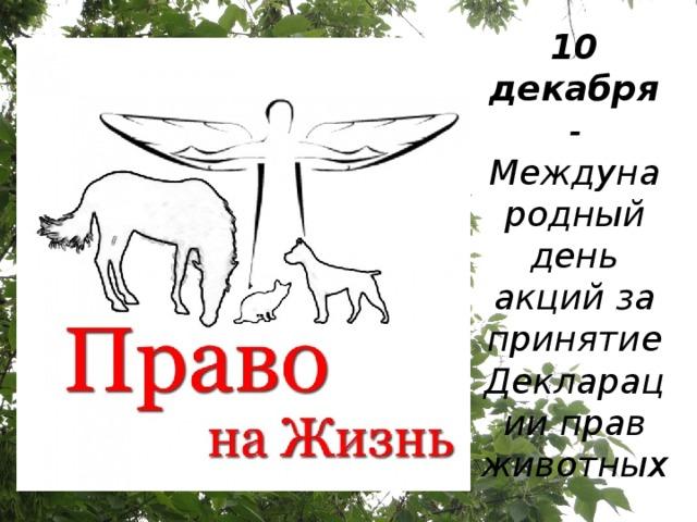 10 декабря - Международный день акций за принятие Декларации прав животных