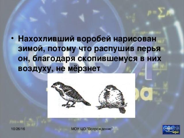 Нахохливший воробей нарисован зимой, потому что распушив перья он, благодаря скопившемуся в них воздуху, не мёрзнет