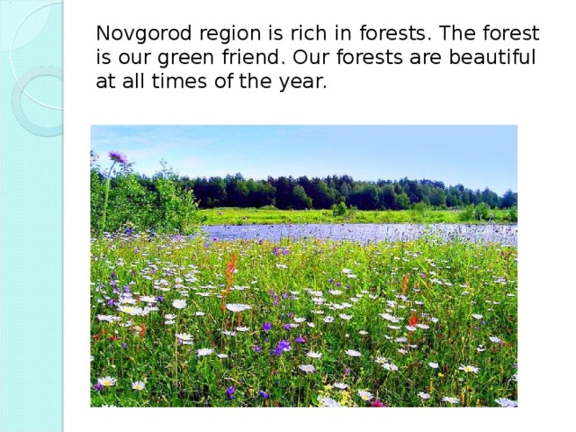 Novgorod region is rich in forests. The forest is our green friend. Our forests are beautiful at all times of the year.