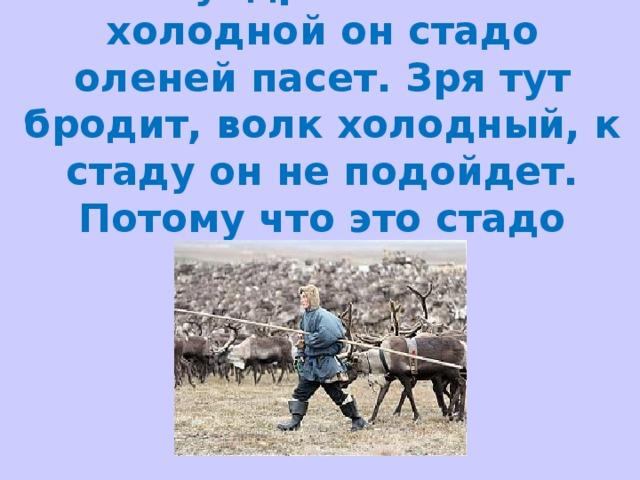 В тундре голой и холодной он стадо оленей пасет. Зря тут бродит, волк холодный, к стаду он не подойдет. Потому что это стадо стережет.