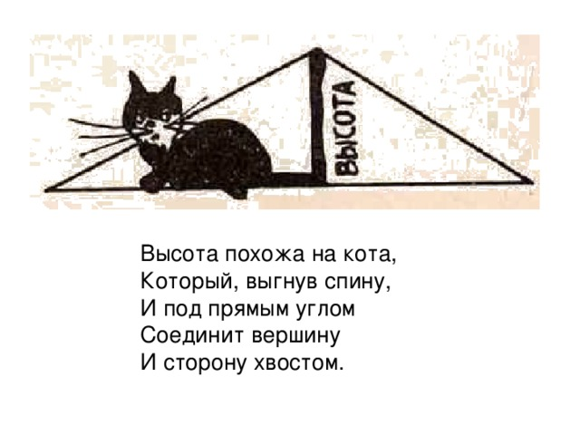 Высота похожа на кота,  Который, выгнув спину,  И под прямым углом  Соединит вершину  И сторону хвостом.