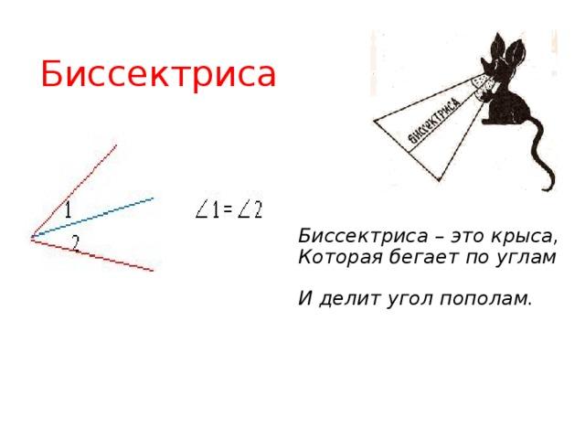 Биссектриса Биссектриса – это крыса,  Которая бегает по углам  И делит угол пополам.