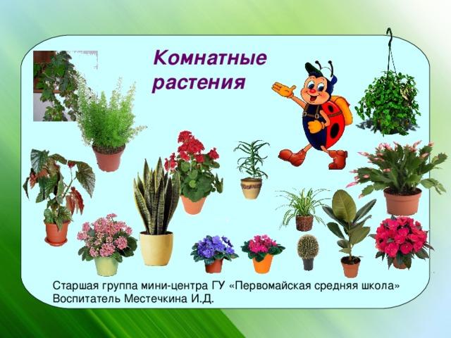 комнатные растения для старшей группы картинки найдете редкие