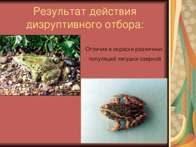 Результат действия дизруптивного отбора: Отличие в окраске различных популяций лягушки озерной