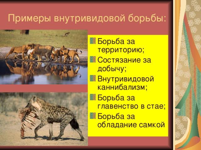 Примеры внутривидовой борьбы: