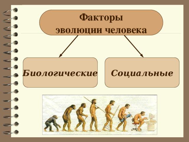 Факторы эволюции человека Биологические Социальные