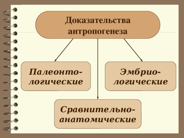 Доказательства антропогенеза Палеонто- Эмбрио- логические логические Сравнительно- анатомические