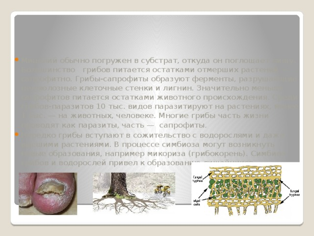 Мицелий обычно погружен в субстрат, откуда он поглощает пищу. Большинство грибов питается остатками отмерших растений — сапрофитно. Грибы-сапрофиты образуют ферменты, разрушающие целлюлозные клеточные стенки и лигнин. Значительно меньше сапрофитов питается остатками животного происхождения. Среди грибов-паразитов 10 тыс. видов паразитируют на растениях, менее 1 тыс. — на животных, человеке. Многие грибы часть жизни проводят как паразиты, часть — сапрофиты. Нередко грибы вступают в сожительство с водорослями и даже высшими растениями. В процессе симбиоза могут возникнуть новые образования, например микориза (грибокорень). Симбиоз грибов и водорослей привел к образованию лишайников.