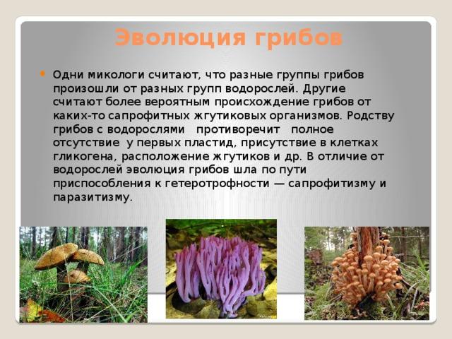 Эволюция грибов