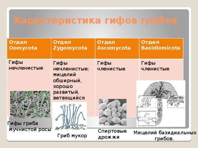 Биология гифы, поздравления новым годом