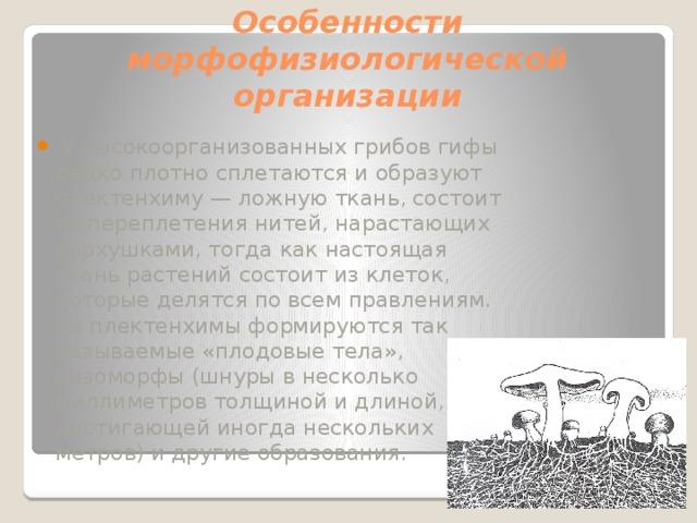 Особенности морфофизиологической организации