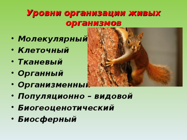 Уровни организации живых организмов