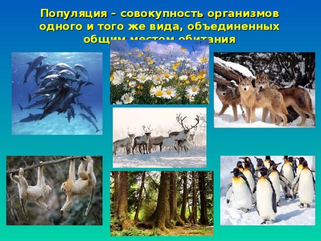 Популяция – совокупность организмов одного и того же вида, объединенных общим местом обитания