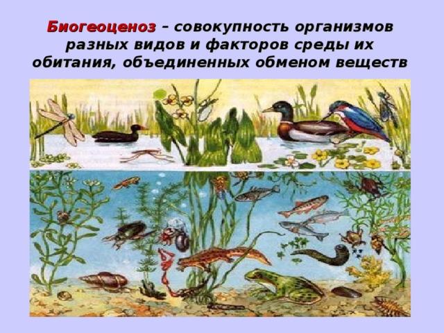 Биогеоценоз – совокупность организмов разных видов и факторов среды их обитания, объединенных обменом веществ