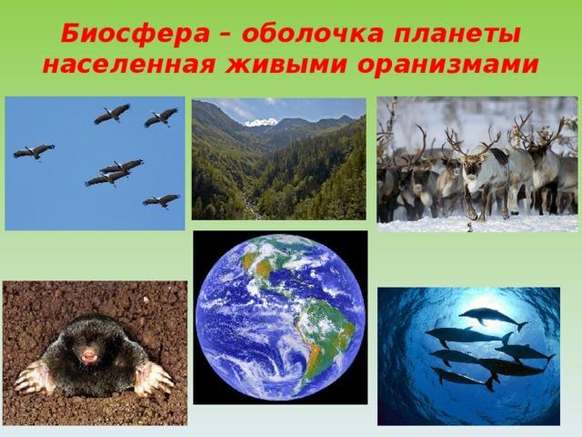 Биосфера – оболочка планеты населенная живыми оранизмами