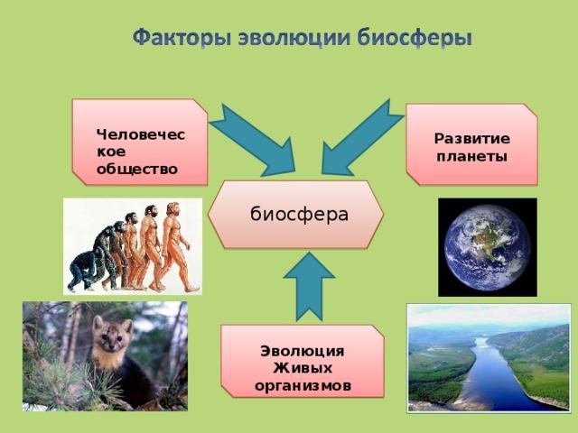 Человеческое общество Развитие планеты биосфера Эволюция Живых организмов