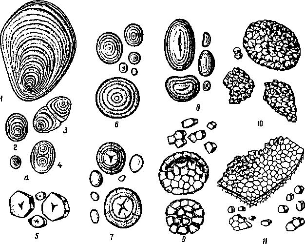 утеплителей для крахмальное зерно картинки появление селин