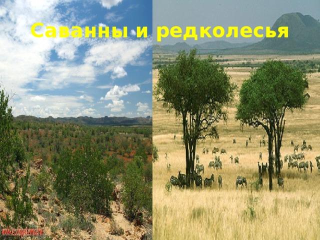 саванны и редколесья в африке занимают мама берет кредиты