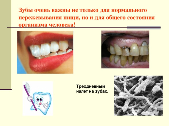 Зубы очень важны не только для нормального пережевывания пищи, но и для общего состояния организма человека! Трехдневный налет на зубах.