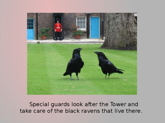 Special guards look after the Tower and take care of the black ravens that live there.